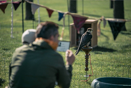 See the impressive falconry display